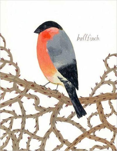 Chroniclebooks.com_bullfinch