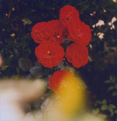 10_gardenscene6
