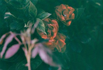 10_gardenstill1
