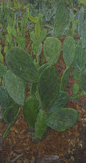 Plantsweb1