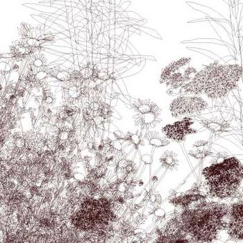 Perennialdetail