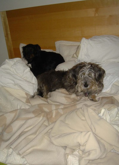 Dogs_on_bed