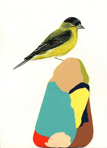 Lessergoldfinch