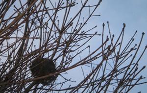 Birds_nest_2