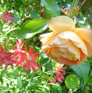 Fall_flower
