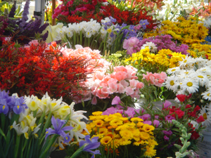 Flowers_at_the_market