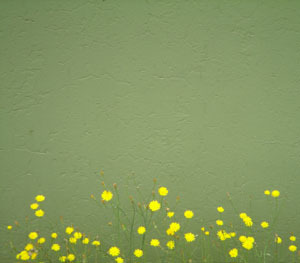 Green_wyellow_flowers