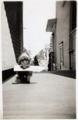 Tiny_dog
