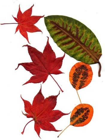 Leaves010